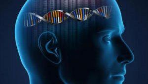 تاثیر ژنتیک بر روی هوش